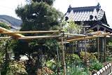 清眼寺の牡丹まつり